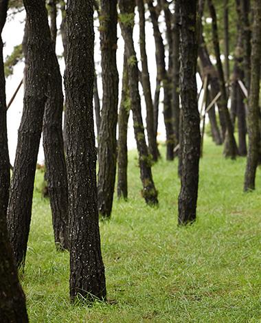 Landscape<br><small></small>
